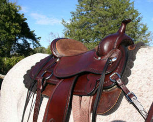Circle Y Park and Trail Saddle Review