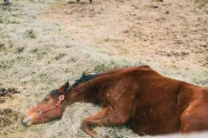How Long Can A Horse Live With EPM