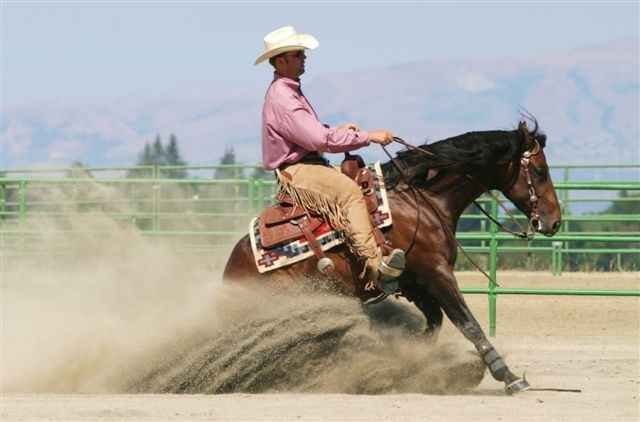 Is Reining Hard on Horses