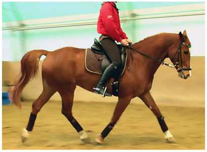 Is Tryptophan Legal in Horse Shows