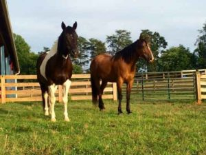 Mare Magic for Geldings Review