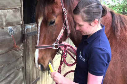 Panacur Power Pack Horse Wormer