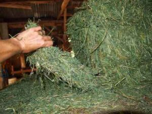 what is a flake of hay