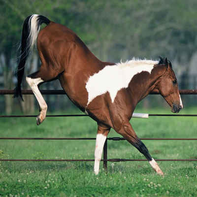 How Much Force Does a Horse Kick With