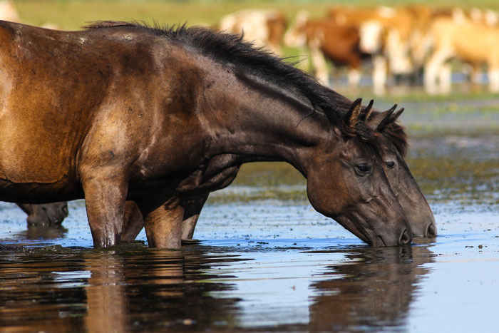 How Much Water Does a Horse Drink