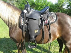 Best Saddle Pad for Gaited Horses
