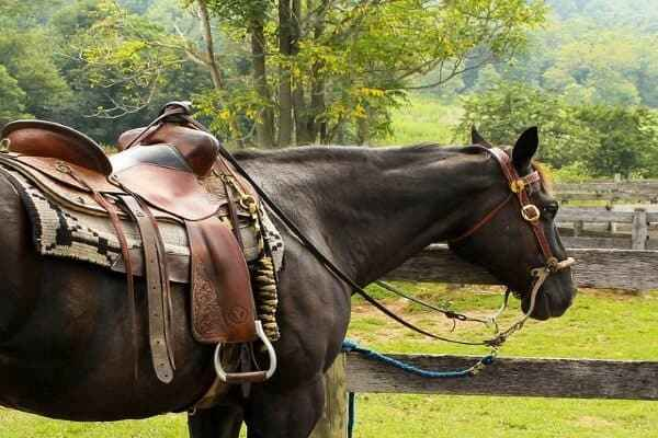 Best Saddle Pad for High Withered Horses