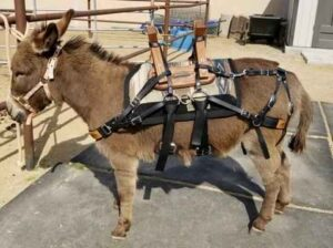 Best Donkey Saddle