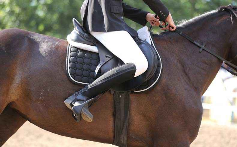 Best Ever Saddle Pads for Sale