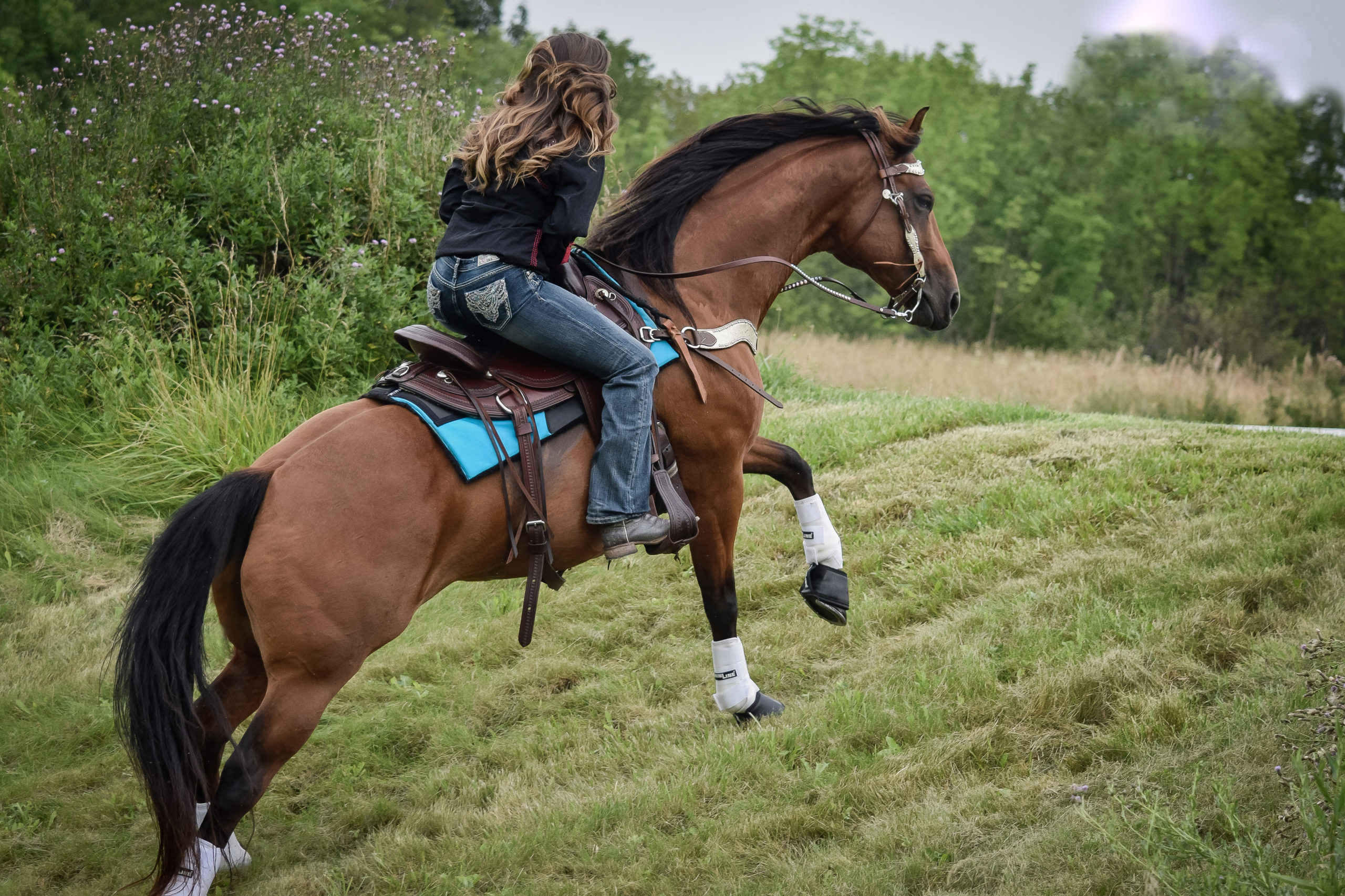 Best Western Saddle Pad for Mutton Withered Horse