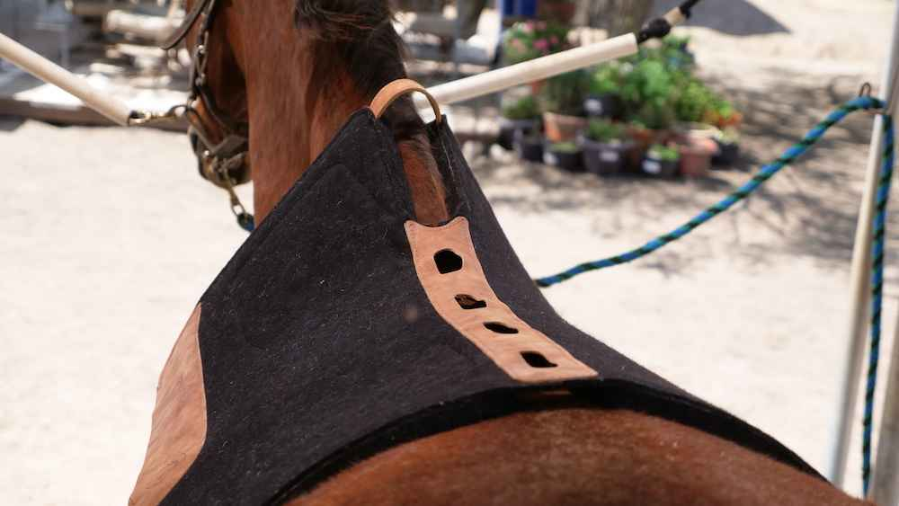 Best Western Saddle Pad for Sore Back