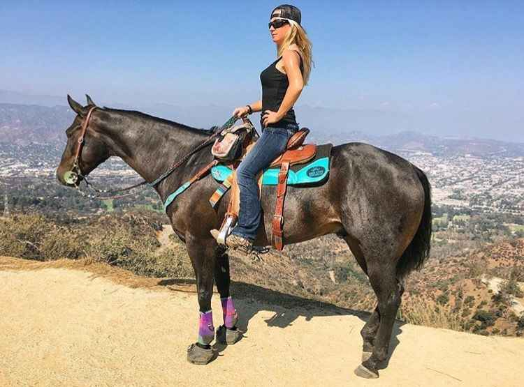Best Western Saddle Pads for Trail Riding