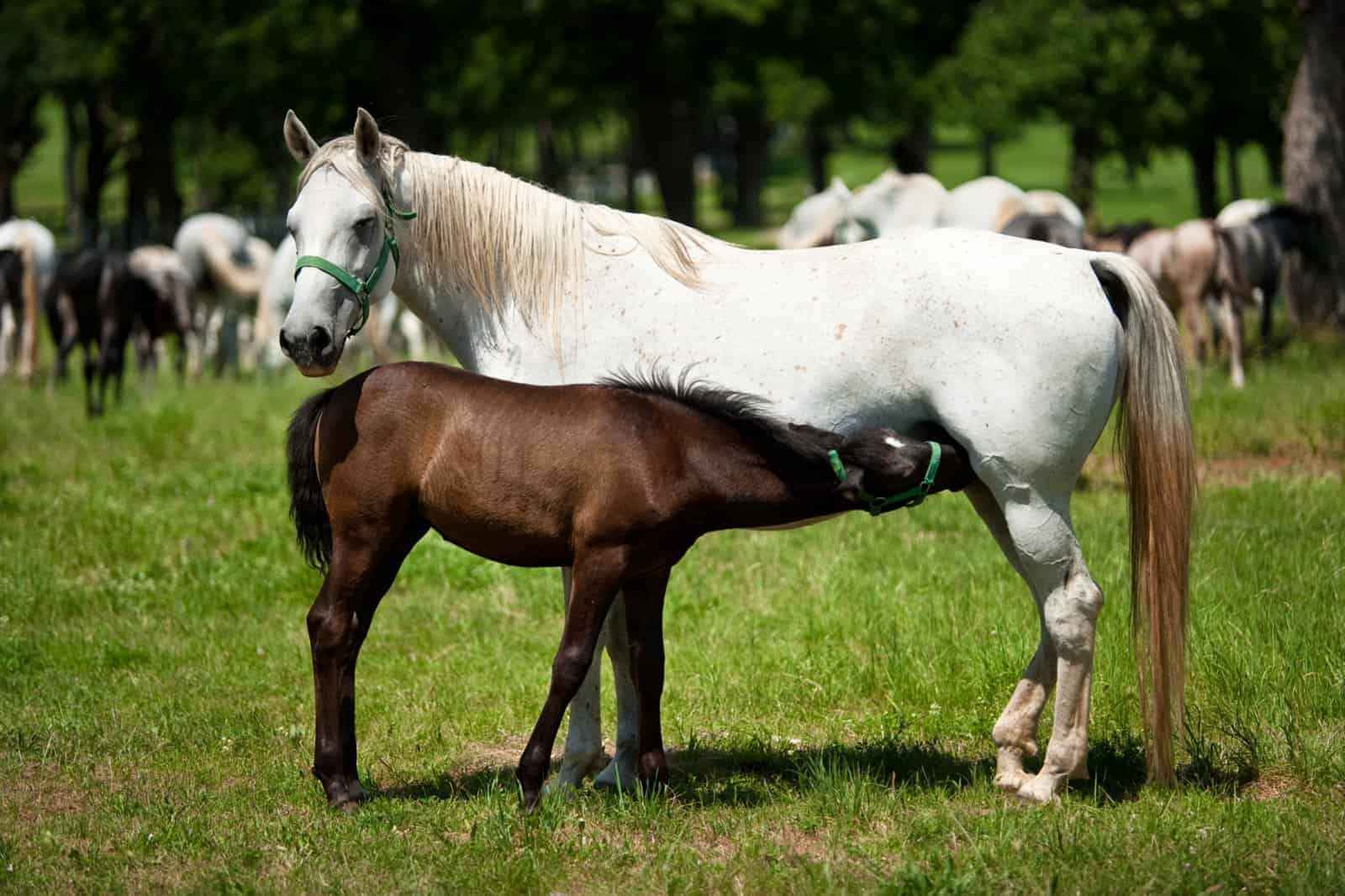 Best Horse Feed For Mare and Foal