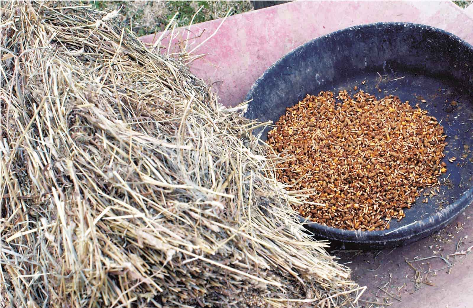 Best Horse Feed For Performance Horses
