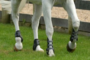 Best Tendon Boots for Horses