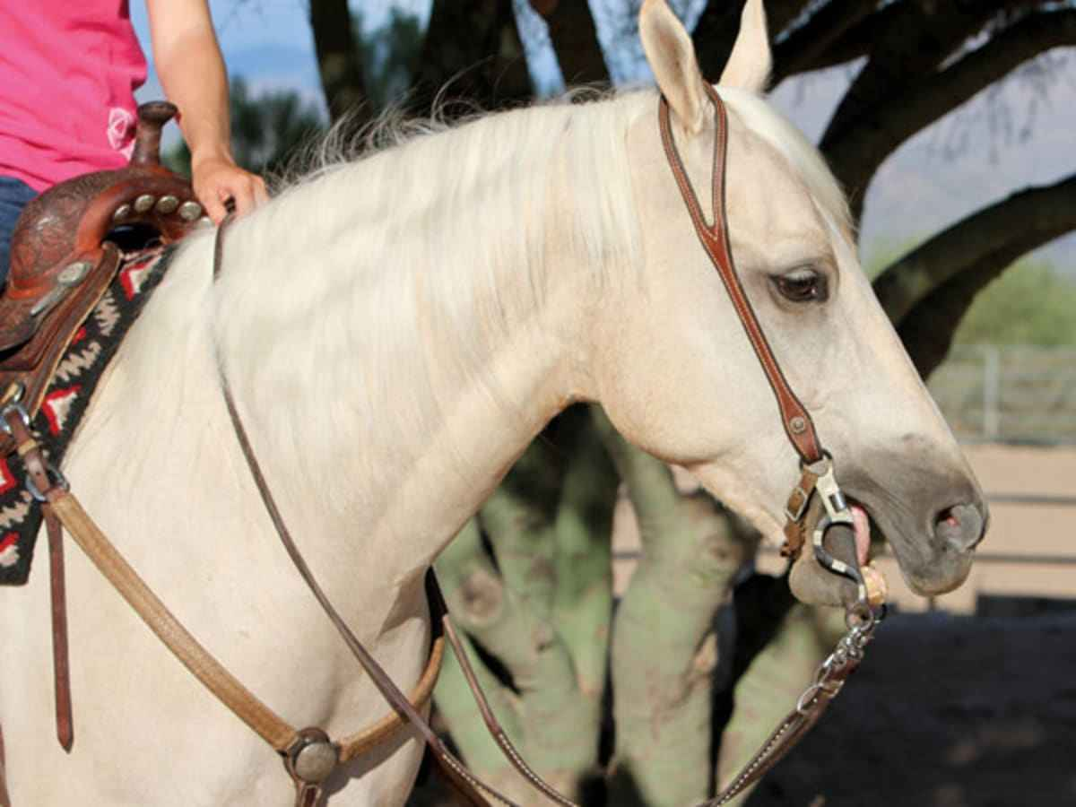5 Steps to Finding the Perfect Horse Bit