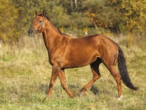 Best Horse Feed For Hard Keepers