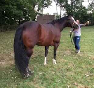 What Is A Free Lease Horse